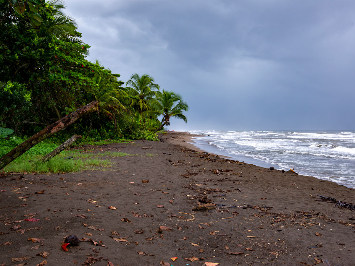 The beach at Tortuguero village, this is where the turtles come ashore to nest.